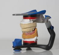 Dentures in articulator, close up Stock Photos