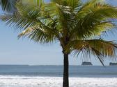 Stock Photo of Central America, Costa Rica, Palm tree on beach at Puerto Carrillo