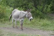 France, Provence, Female donkey shouting on meadow Stock Photos