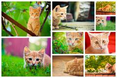 Peaceful red tabby male kitten. Stock Photos