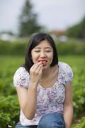 Germany, Bavaria, Young Japanese woman eating fresh strawberries in strawberry - stock photo