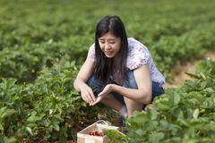 Germany, Bavaria, Young Japanese woman picking strawberries in field - stock photo