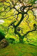 Amazing green tree Stock Photos