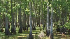 Big Thicket tupelo bayou Stock Footage