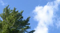 Clouds pass by trees Stock Footage