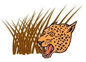 Leopard head Stock Illustration