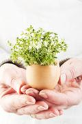 Woman hand holding cress in egg shell, close up Stock Photos