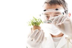 Scientist removing cress with tweezers from egg shell, close up Stock Photos