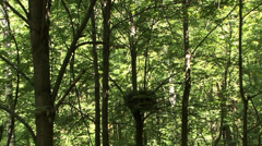 The nest of the goshawk Stock Footage