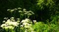 Summer landscape. Footage
