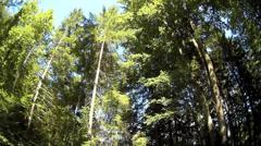 Fisheye Tree pine Höllentalklamm Hollentalklamm Gorge Grainau Hammersbach Stock Footage