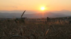 grain field sunset - stock footage