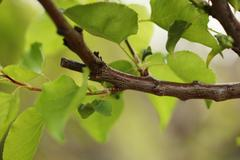 Green leaves on tree branch Stock Photos