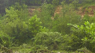 Pouring Rain Storm in the Forest Stock Footage