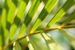 palm leaves pattern - stock photo