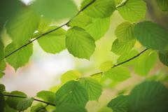 Stock Photo of green leaves backgrond