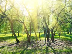 Stock Photo of park trees