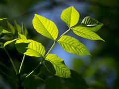 Stock Photo of leaf