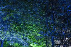 Germany, Bavaria, Illuminated trees at summer rave party Stock Photos