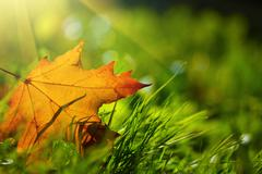 fall leaf - stock photo