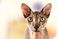 Stock Photo of cat portrait