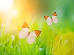 Stock Photo of butterflies over grass