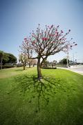 wide angle tree - stock photo