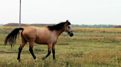 Horse, mare in the pasture Stock Footage