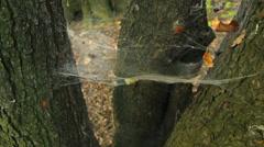spider web on tree - stock footage