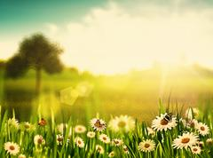 bright summer afternoon. natural backgrounds with beauty chamomile flowers - stock photo