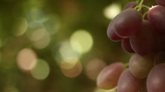 Close-up of a grape on a vineyard - stock footage