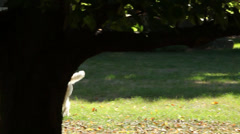 Dog walks around tree Stock Footage