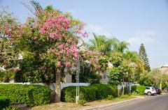 Stock Photo of Beauty of the ceiba pentandra blossom