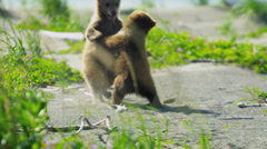 Baby Brown Bear cubs playing in summer time and having fun, Alaska, USA - stock footage