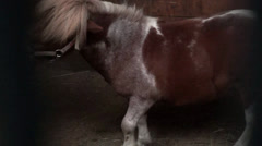Pony Stock Footage