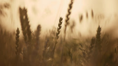 Highway & wheat field Stock Footage
