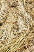 grass for elephant dung compost. - stock photo
