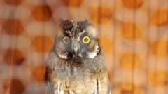 Beautiful Owl Stock Footage