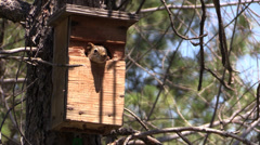 P02921 Red Squirrel in Bird House Stock Footage