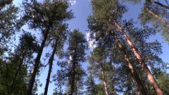 P02939 Black Hills Ponderosa Pine Forest Stock Footage