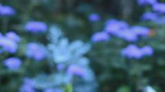 Garden flowers. Motorised dolly shot.  Stock Footage