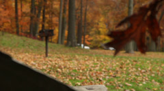 Falling Leaves - Autumn in a New England Park Stock Footage