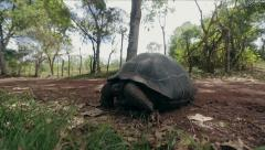 Tortoise on the Galapagos Islands - stock footage