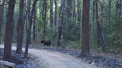Kanha National Park in India Stock Footage