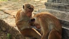 Monkeys Care Stock Footage