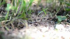 Ants (macro video) - stock footage