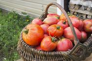 Stock Photo of red tomatoes in a wicker basket