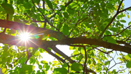 Stock Video Footage of sunlight through the leaves