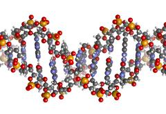 dna structure, b-dna form. - stock illustration