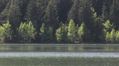 Peace full scenery, serene mountain lake and green fir tree forest Stock Footage